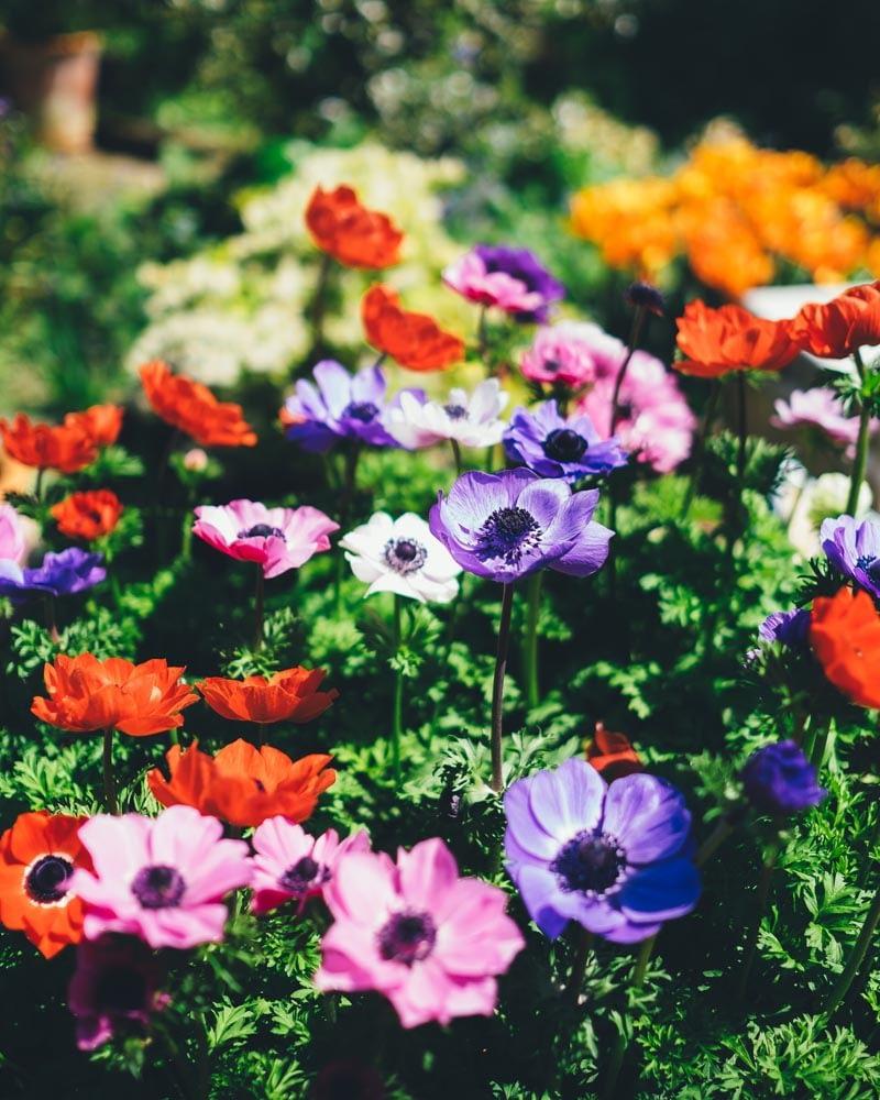 Cuore bloempjes